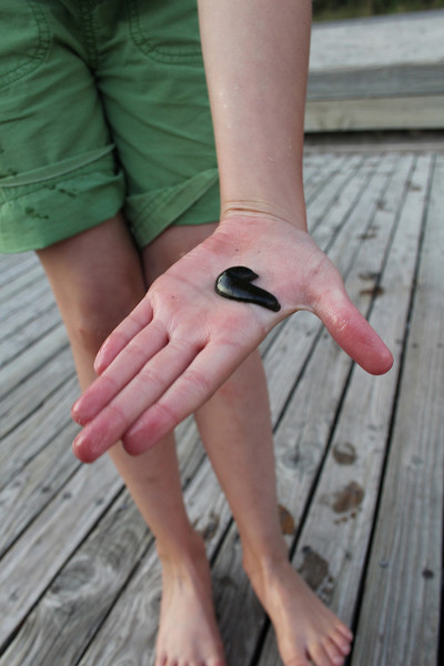 Sarah pulled this out of the lake.  Looks a hell of a lot like a leech (sp?) to me...