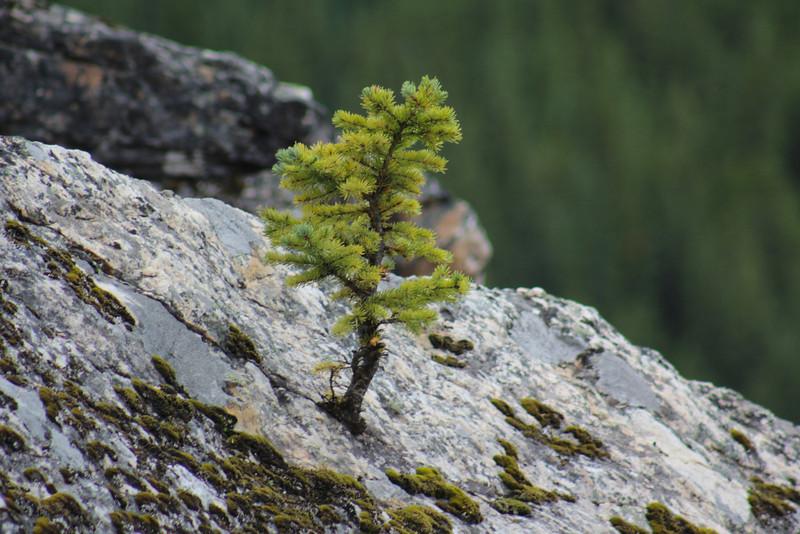 More impressive flora.