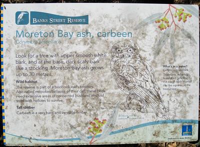 Moreton Bay ash - Banks Street Reserve - Signs, Plants & Flowers. (Point & Shoot Camera); Newmarket, Brisbane, Queensland, Australia; 24 September 2012. Photos by Des Thureson - http://disci.smugmug.com.
