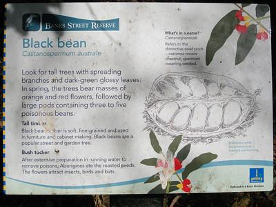 Black Bean - Banks Street Reserve - Signs, Plants & Flowers. (Point & Shoot Camera); Newmarket, Brisbane, Queensland, Australia; 24 September 2012. Photos by Des Thureson - http://disci.smugmug.com.