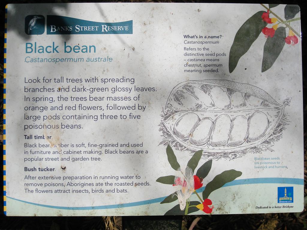 """Black Bean - Banks Street Reserve - Signs, Plants & Flowers. (Point & Shoot Camera); Newmarket, Brisbane, Queensland, Australia; 24 September 2012. Photos by Des Thureson - <a href=""""http://disci.smugmug.com"""">http://disci.smugmug.com</a>."""