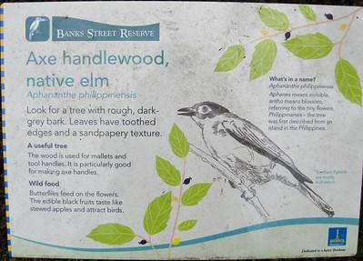 Axe handlewood, native elm - Banks Street Reserve - Signs, Plants & Flowers. (Point & Shoot Camera); Newmarket, Brisbane, Queensland, Australia; 24 September 2012. Photos by Des Thureson - http://disci.smugmug.com.