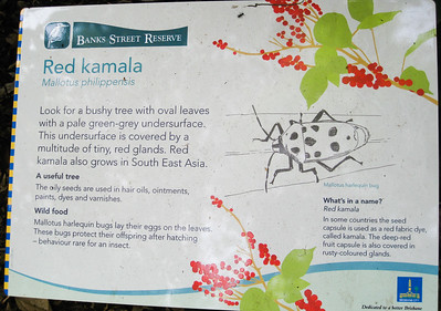 Red Kamala - Banks Street Reserve - Signs, Plants & Flowers. (Point & Shoot Camera); Newmarket, Brisbane, Queensland, Australia; 24 September 2012. Photos by Des Thureson - http://disci.smugmug.com.