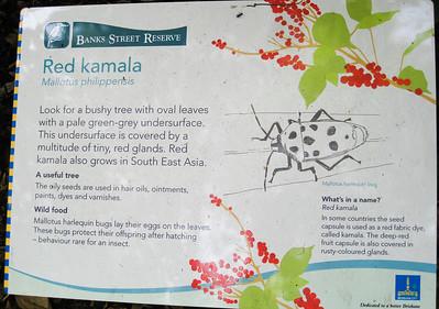 Red Kamala - Banks Street Reserve - Signs, Plants & Flowers. (Point & Shoot Camera); Newmarket, Brisbane, Queensland, Australia; 24 September 2012. Photos by Des Thureson - http://disci.smugmug.com.