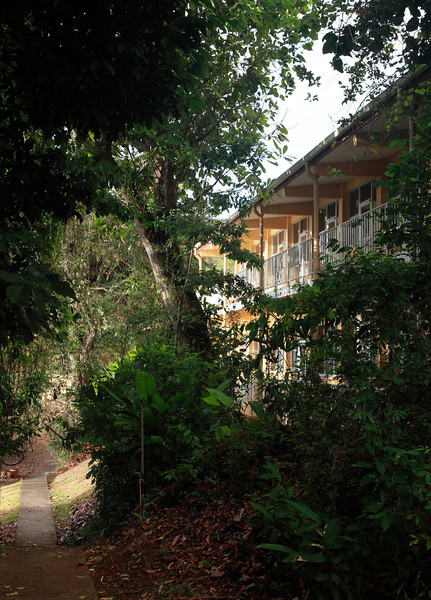 Walkway in front of one of the two main laboratory buildings on Barro Colorado Island, Panama.