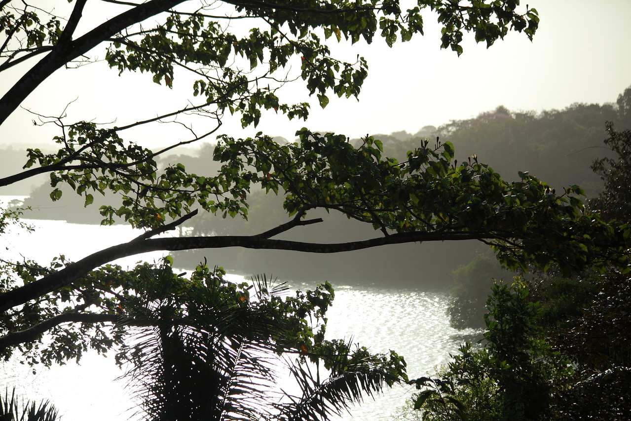 Sunrise at the Smithsonian Tropical Research Institute, Barro Colorado Island, Panama