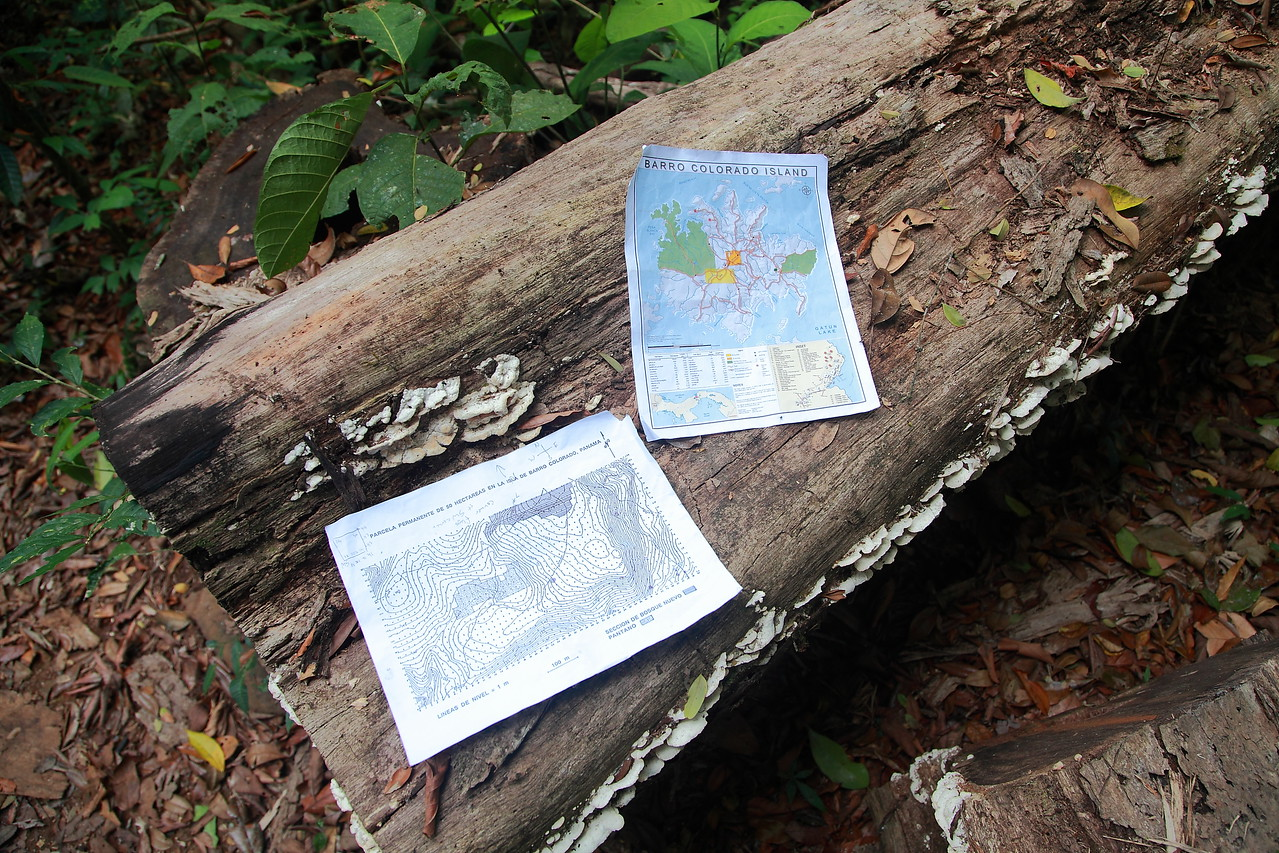 Maps of Barro Colorado Island and the 50Ha Forest Dynamics Plot.