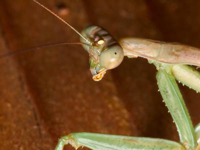 Bass Lake Bugs 2012