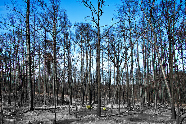 Bastrop State Park Fire