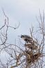 Heron Pair 7