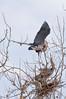 Heron Pair 4