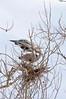 Heron Pair 6