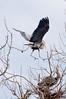 Heron Pair 3