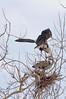 Heron Pair 5