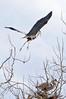 Heron Pair 2