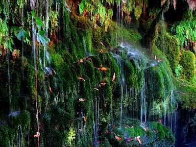 mossey cascade close-up