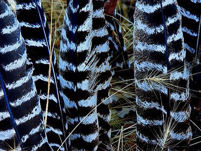 raptor feathers