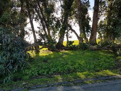 Chabot 5Mar2017 (fallen tree)