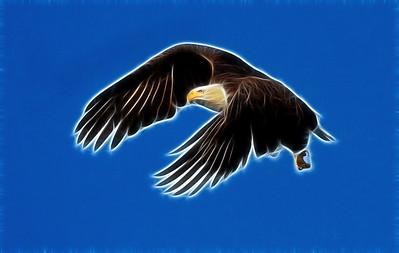 Baytown-Eagle--4081-copyFractalius