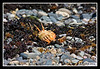 Dead crab on rocky beach