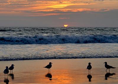 Sundown with the gulls