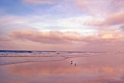 In the Pink ~  A sea of pastel hues along the shore at sunrise.