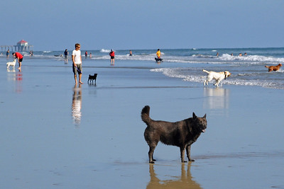 Dog Day Afternoon - Dog Beach, Huntington Beach CA