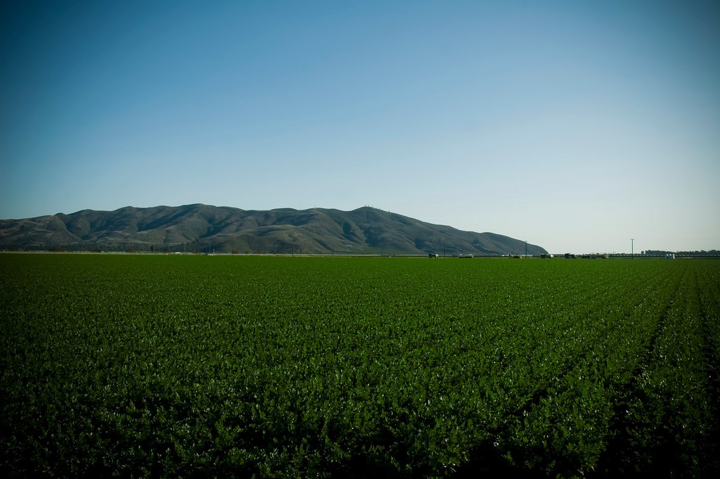 A field near PCH, somewhere in the outskirts of Oxnard.