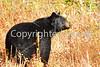 black bear 280