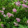 Hahn Horticulture Garden, Blacksburg, VA