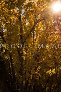 Sunbeams in Fall 1