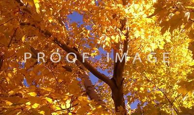 Autumn in Colorado 1
