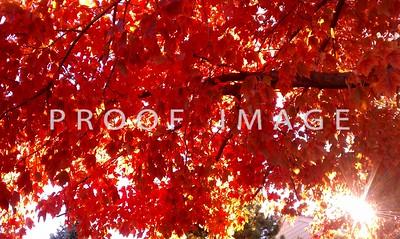 Autumn in Colorado 2