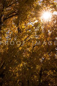 Sunbeams in Fall 2