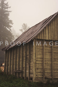 Foggy Day Wood Shed