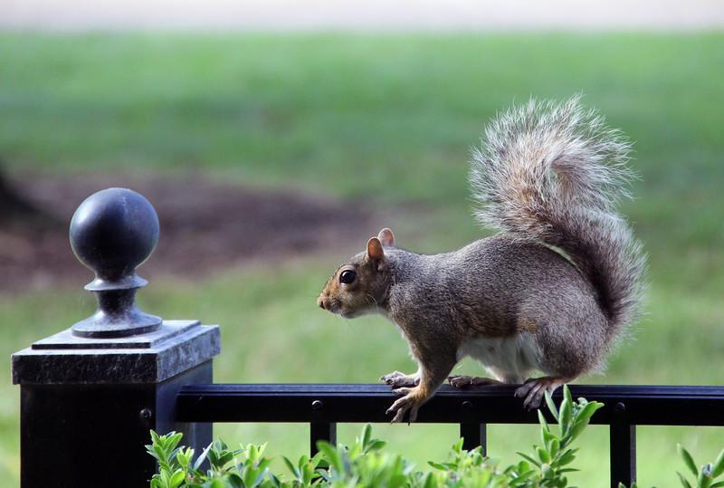 Patio Squirrels