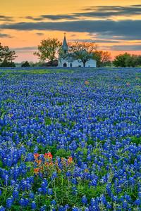 Church and Bluebonnets, Texas
