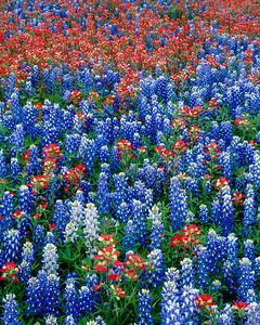 Texas Wildflowers Mix