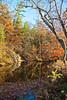 Stoney Creek in Fall