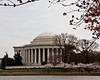 Washington DC and Cherry Blossoms