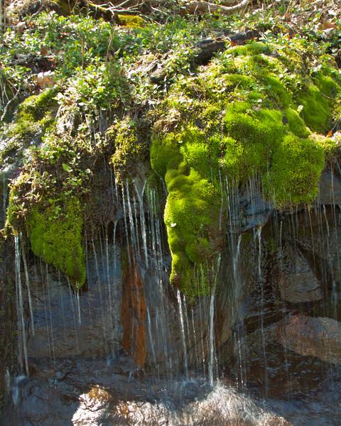Moss in Spring Rain