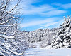 Snow Covered trees in Fort Valley Virginia
