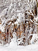 Fort Valley Winter