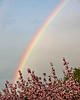 Rainbow in Spring