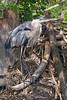 CVNP Beaver Marsh GBH 2