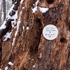 Westchester Wilderness Walk on Christmas Weekend
