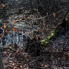 Beech tree and illuminated polytrichium moss in wetland