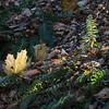 Thanksgiving 2012 WWW-5547