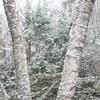 Rock Hill Road Winter Weather-5943