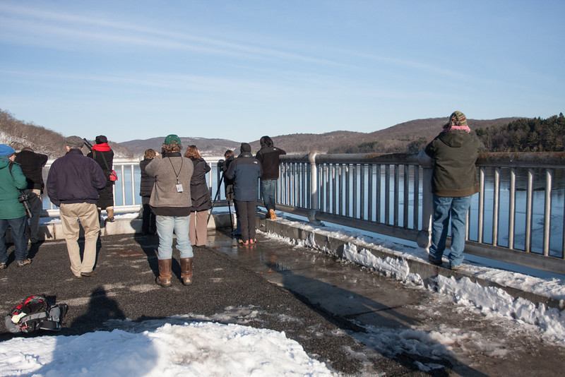 BAS Eagle Viewing Station on New Croton Dam -Teatown Eagle Fest, February 10, 2013